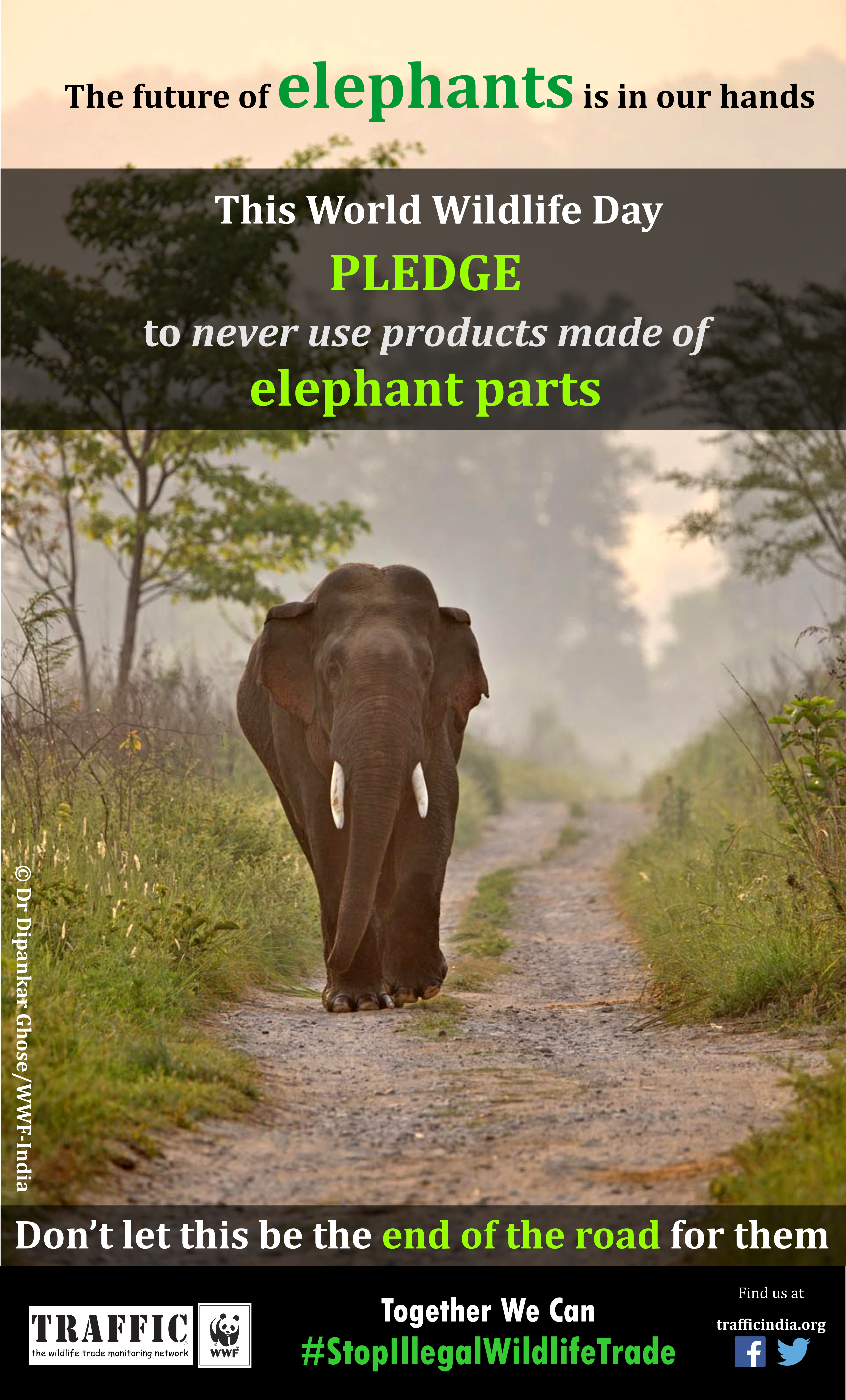 India's mammoth problem: Elephants threatened by poaching