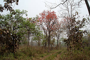 Forests of Bornadi Wildlife Sanctuary, North Bank Landscape