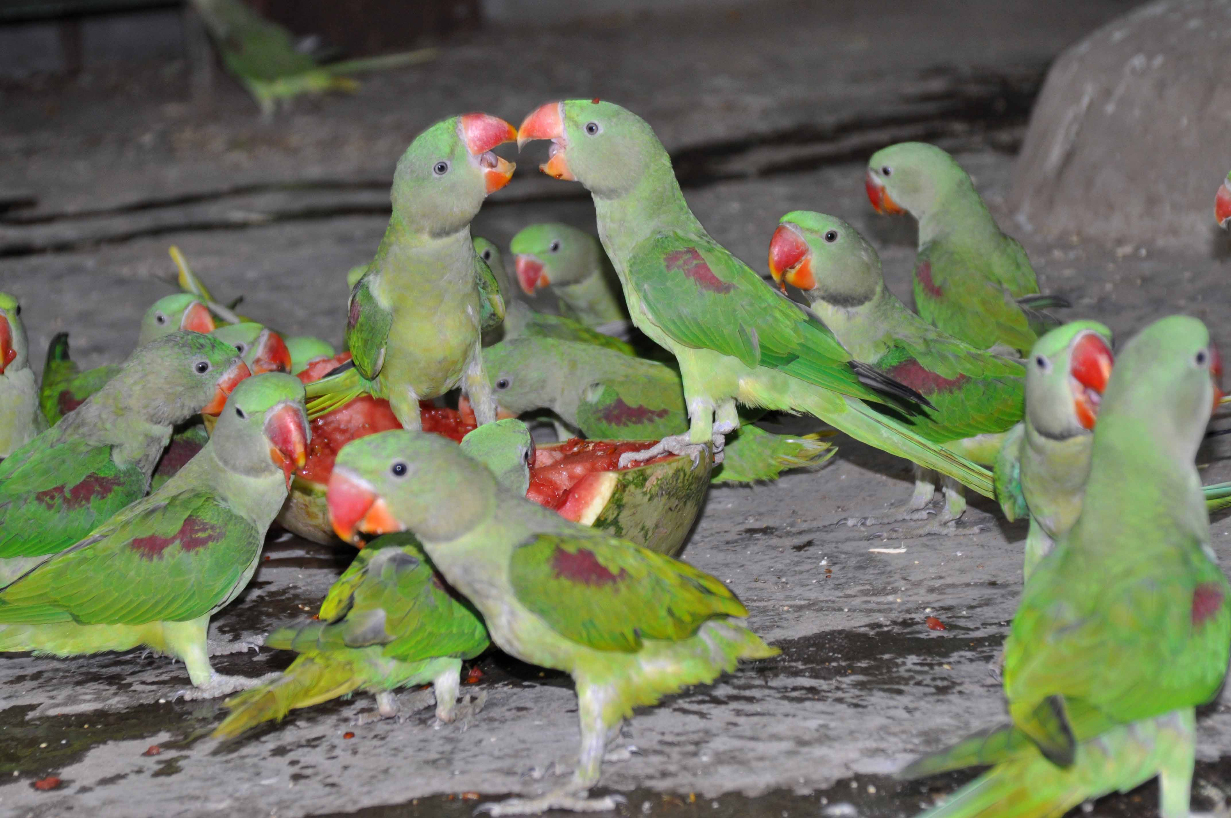 TRAFFIC helps to claw back illegal parrot trade in India | WWF India