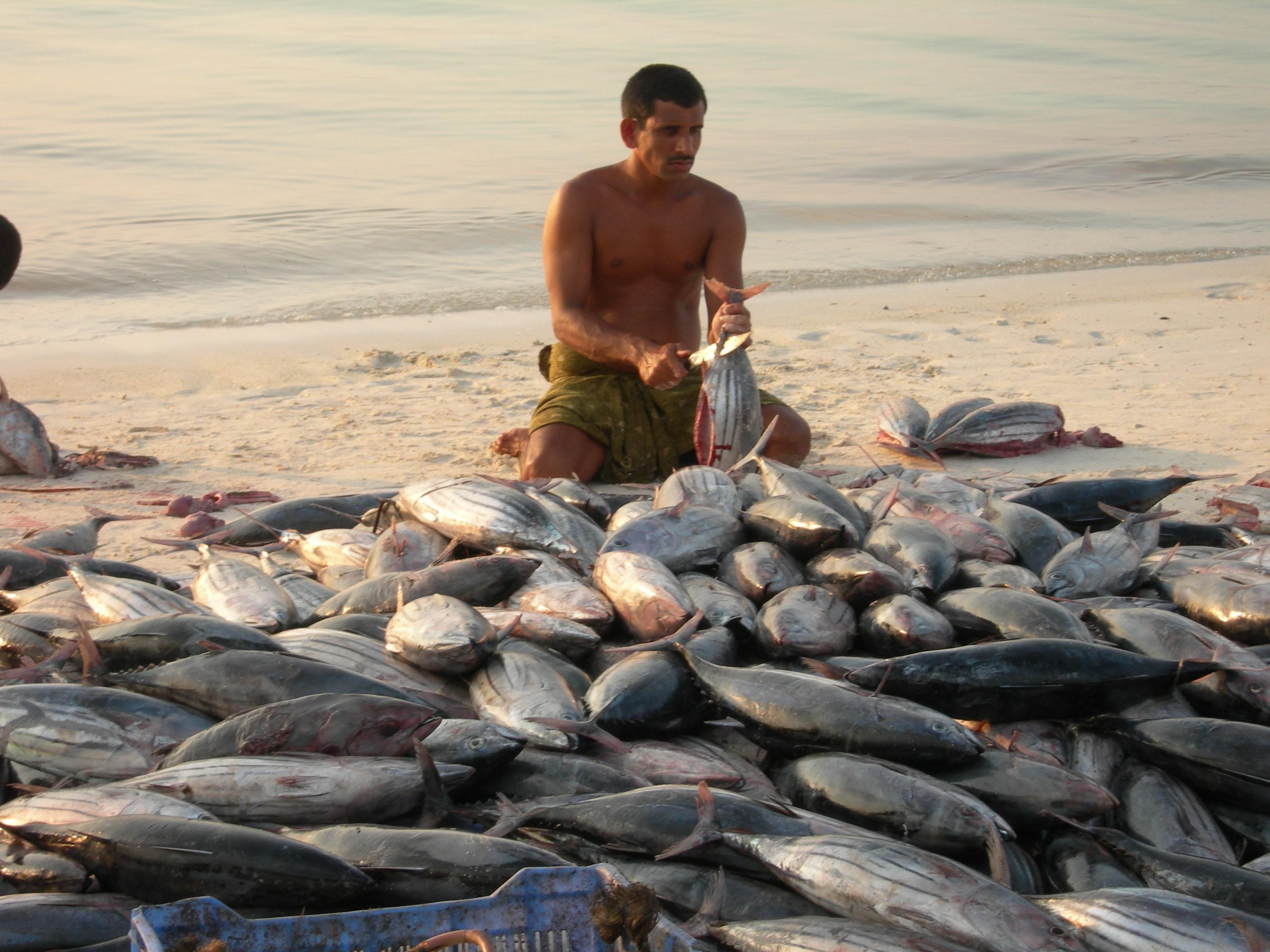 A Partnership towards sustainable tuna fishing   WWF India
