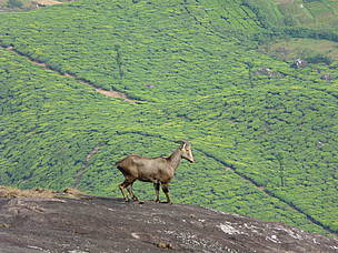 Conservation of western ghats