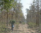 Fuelwood dependence of the communities of Rampur Tongia on the forest resources