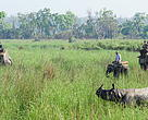 Rhino in Kakraham South Sonaripur before capture